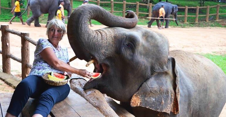 Pinnawala Elephant Orphanage 1