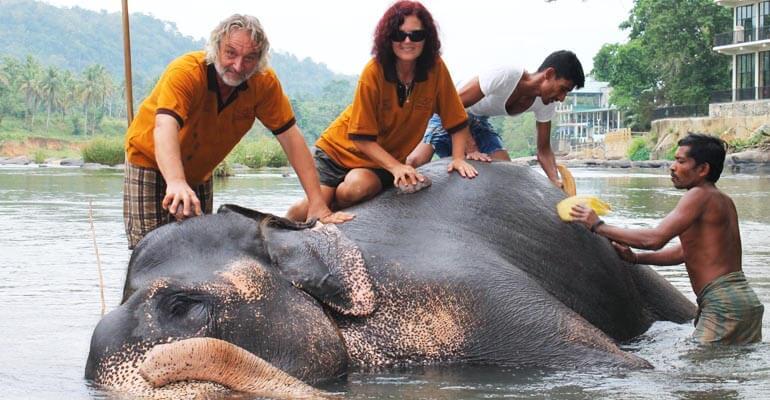 Pinnawala Elephant Orphanage 2