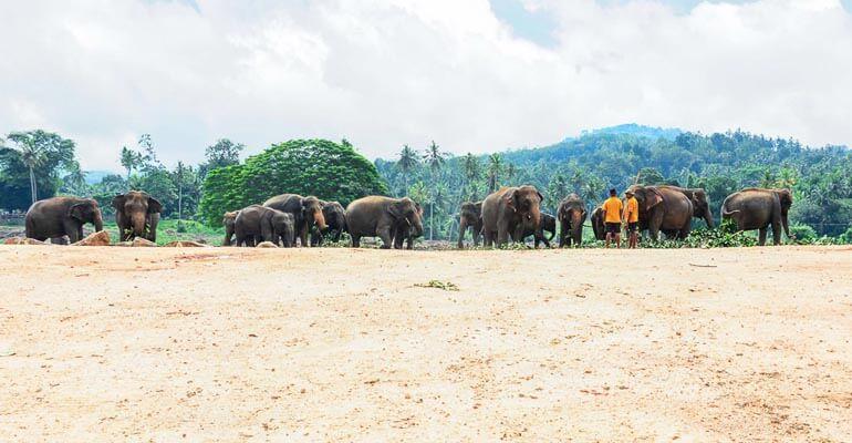 Pinnawala Elephant Orphanage 4