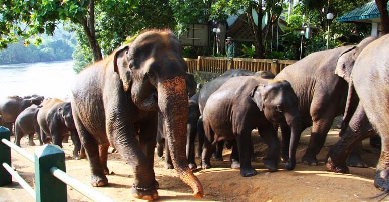 Pinnawala Elephant Orphanage 5