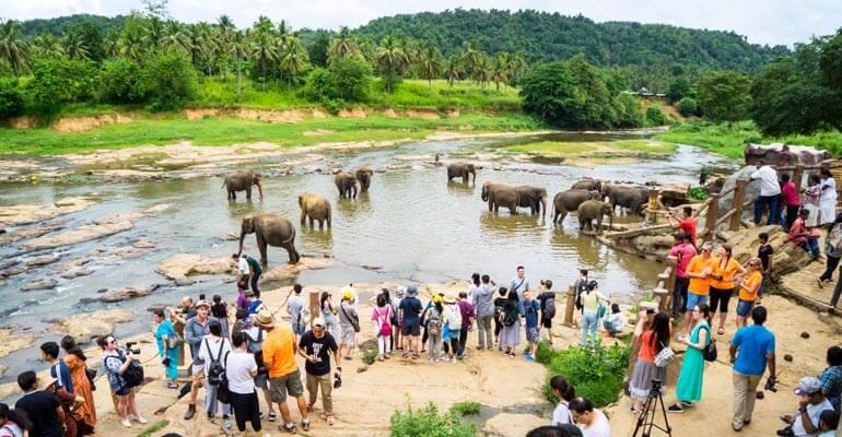 Pinnawala Elephant Orphanage 6