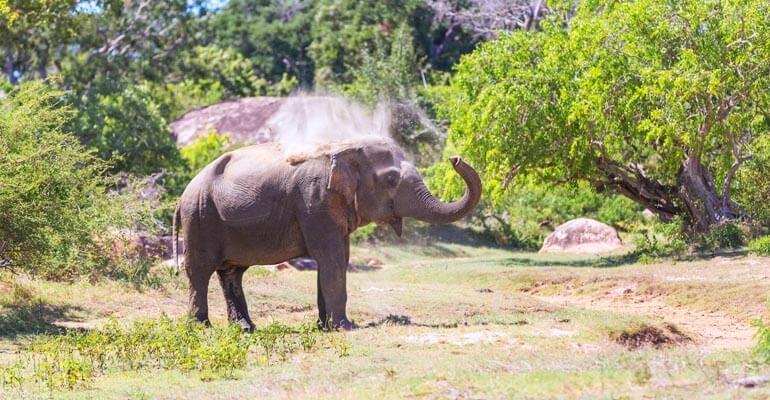 Yala National Park Morning Safari